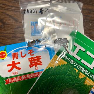 【プランター栽培】大葉50粒、エゴマ50粒!《小分けパック》(野菜)