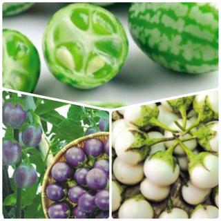 きゅうりメロン 種+超ミニ丸ナス 種 (白・紫)(その他)