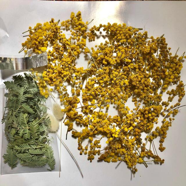 ミモザ ドライフラワー 花房 短め 100本 素材 ハンドメイドの素材/材料(その他)の商品写真