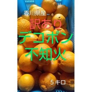 香川県産 訳あり デコポン不知火 5キロ(フルーツ)