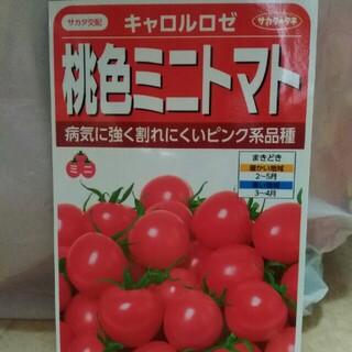 野菜 種 ピンク トマト(野菜)