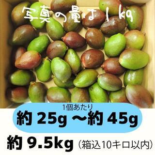 [青10-1]約9.5キロ グリーンマンゴー 青マンゴー 加工用 マンゴー(フルーツ)