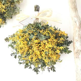 yellow×green  春のミモザのドライフラワースワッグ Cタイプ(ドライフラワー)