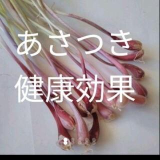 北海道無農薬安心 あさつき苗 球根 可愛い 250個 オマケ付き(野菜)