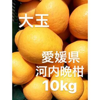 愛媛県 宇和ゴールド 河内晩柑 大玉 10kg(フルーツ)