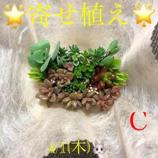 多肉植物❤︎寄せ植え❤︎このまま飾れます♪ピンクフラワー柄鉢(その他)