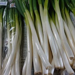 ✳️白ネギ✳️富山県産白ネギB品3㎏(30~40本)(野菜)