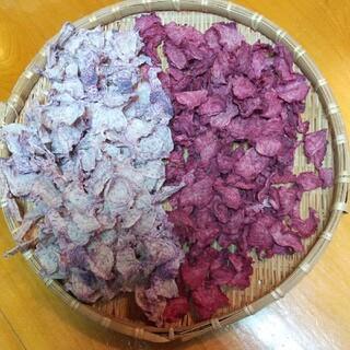 【お試し】無農薬 乾燥野菜 赤大根&紫大根(野菜)