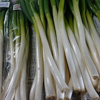 ✳️白ネギ✳️富山県産西田白ネギB品3㎏(30~40本)(野菜)