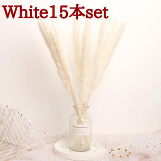 パンパスグラス 15本 ドライフラワー テールリード ホワイト(ドライフラワー)
