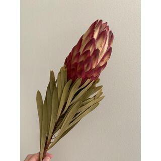 大地農園 プロテア 花材 ドライフラワー インテリア(ドライフラワー)