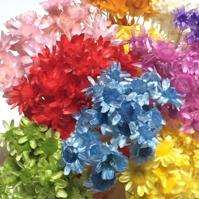 スターフラワー☆ブロッサム☆10色 ハンドメイドのフラワー/ガーデン(ドライフラワー)の商品写真