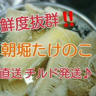 【チルド発送♪】孟宗たけの子 水煮 4kg+500g増量中‼️‼️(野菜)
