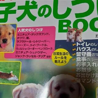 子犬のしつけ(趣味/スポーツ/実用)