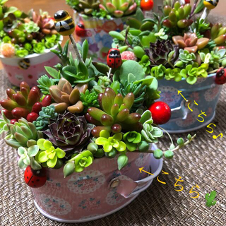 多肉植物❤︎寄せ植え❤︎このまま飾れます❤︎ピンク、水色バスケット2点セット♪(その他)