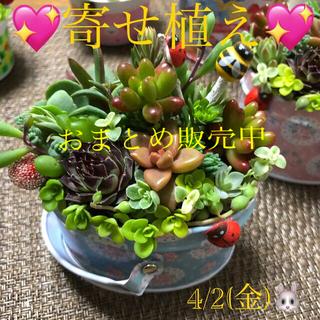 多肉植物❤︎寄せ植え❤︎このまま飾れます❤︎水色バスケット♪(その他)