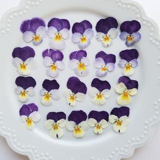 【6月末販売終了SALE中】ビオラ ドライフラワー(押し花④)  20枚(ドライフラワー)