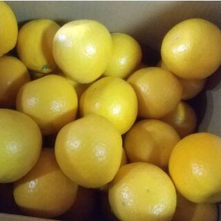 【農家直送】河内晩柑(ジューシーオレンジ)Sサイズ 10kg(フルーツ)
