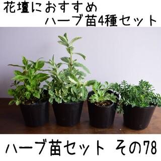 要望対応可能!ハーブ苗セット その78 花壇におすすめハーブ苗4種(プランター)