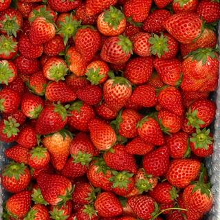 クール便●ジャム用さがほのか2kg●いちご苺イチゴ(フルーツ)