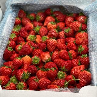 クール便●ジャム用苺食べ比べ4kg (ほのか&いちごさん)●苺イチゴ(フルーツ)