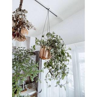 ロンハーマン(Ron Herman)のSOLSO FARM🍋新品 スタイリッシュハンギングプランター 観葉植物鉢(その他)