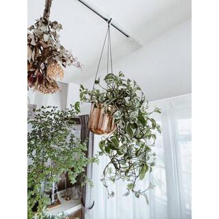 アクタス(ACTUS)のSOLSO FARM🍋新品 スタイリッシュハンギングプランター 観葉植物鉢(その他)
