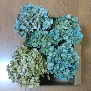 【haruco様確認用】アジサイドライ 青緑~緑青~黄~クリーム~水青~紫茎有5(ドライフラワー)
