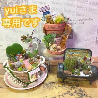 多肉植物の寄せ植え 妖精の庭soup cupと他2品(その他)