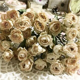 もちくん専用です❀✿ミニ薔薇 クリーミーホワイト ドライフラワー(ドライフラワー)