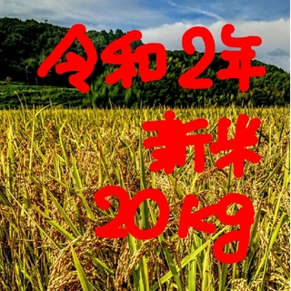 令和2年産新米 低農薬玄米20キロ 山田錦の里より農家直送。。(米/穀物)
