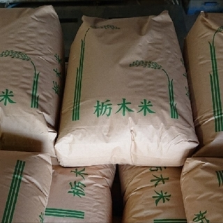 令和2年 栃木県産 ブランド米 とちぎの星  5kg 天皇献上米 新米(米/穀物)
