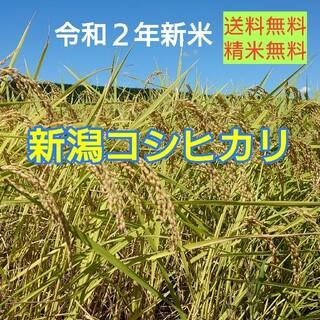 農家直送!新潟コシヒカリ玄米30kg(米/穀物)