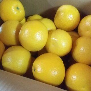 【農家直送】河内晩柑(ジューシーオレンジ)Sサイズ 10kg 熊本県産(フルーツ)