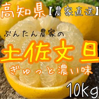 高知県 文旦 ぶんたん 10kg(フルーツ)