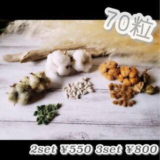 綿の実 種 コットン種 綿花 白 茶 緑 3種類 70粒(その他)