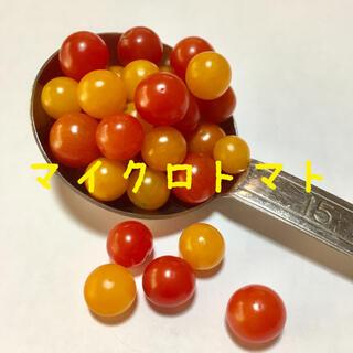 マイクロトマト 種 (赤色 ・黄色)(その他)