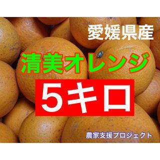 清美オレンジ5キロ(フルーツ)