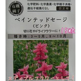 ペインテッドセージ エディブルフラワー 専用種子 固定種 家庭菜園 野菜の種(野菜)