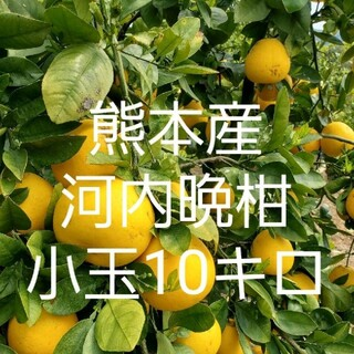 熊本県産 河内晩柑 10キロ小玉(フルーツ)