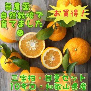 旬の柑橘!無農薬自然栽培!木成り完熟三宝柑、甘夏セット☆10キロ(フルーツ)