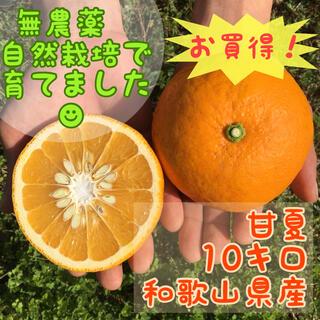 旬の柑橘!!春香る☆無農薬自然栽培☆木成り完熟甘夏☆10キロ(フルーツ)
