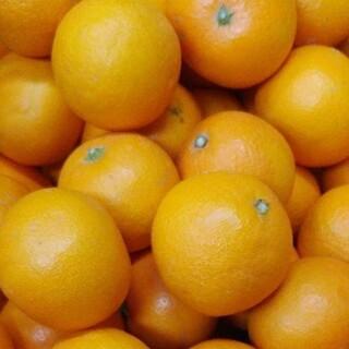 あゆみこ様すり傷少なめ緑豊かな清見オレンジ大小詰め合わせ8㎏(フルーツ)