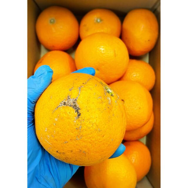 家庭用【清美タンゴール】 2〜3Lサイズ 5kg 食品/飲料/酒の食品(フルーツ)の商品写真