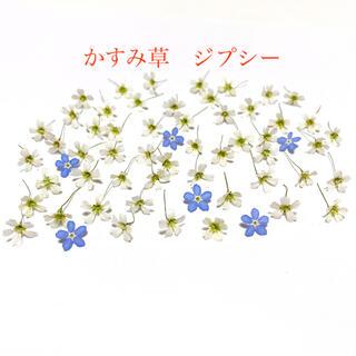かすみ草 ジプシー ドライフラワー 50輪(各種パーツ)
