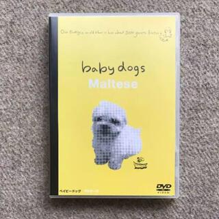 マルチーズ DVD 〜baby dogs ♪ Maltese〜(U•ᴥ•U)))(家庭用ゲームソフト)