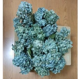 【アマオちゃん様確認用】アジサイドライフラワー 青緑~緑青系 茎有 中小15(ドライフラワー)
