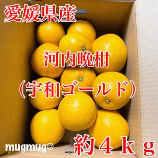 タイムセール中!!愛媛県産 河内晩柑(宇和ゴールド)約4kg《家庭用》(フルーツ)