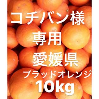 コチバン様 専用 愛媛県 ブラッドオレンジ タロッコ 10kg(フルーツ)