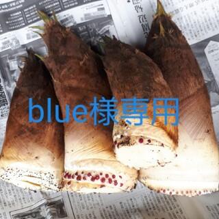 たけのこ 4kg 千葉県産 blue様専用(野菜)